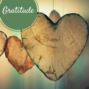 gratitude focus by still sacred