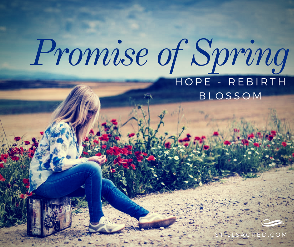 promise of spring by still sacred
