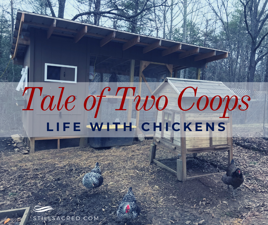 Chicken Coop Evolution